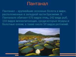 Пантанал Пантанал – крупнейшие сезонные болота в мире, расположенные в западн