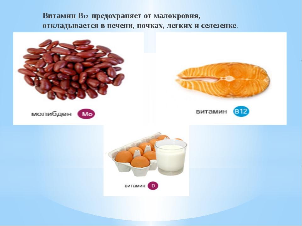Витамин В12 предохраняет от малокровия, откладывается в печени, почках, легк...
