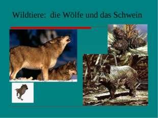 Wildtiere: die Wölfe und das Schwein