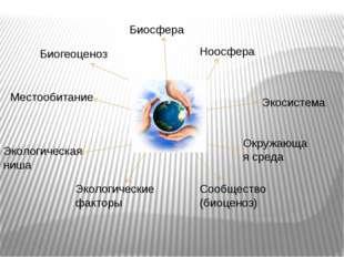 Биосфера Ноосфера Экосистема Окружающая среда Местообитание Экологические фак