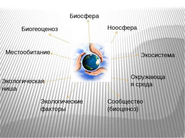 Биосфера Ноосфера Экосистема Окружающая среда Местообитание Экологические фак...