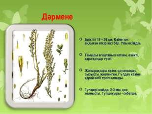 Дәрмене Биіктігі 18 – 30 см. Өзіне тән аңқыған өткір иісі бар. Улы өсімдік.