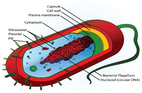 C:\Users\admin\Desktop\school-education-science-diagram-cell-cartoon.png