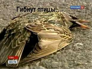 Гибнут птицы….