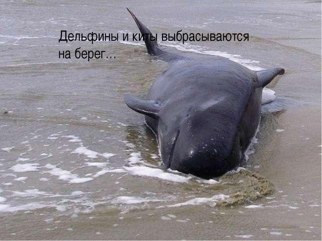 Дельфины и киты выбрасываются на берег…