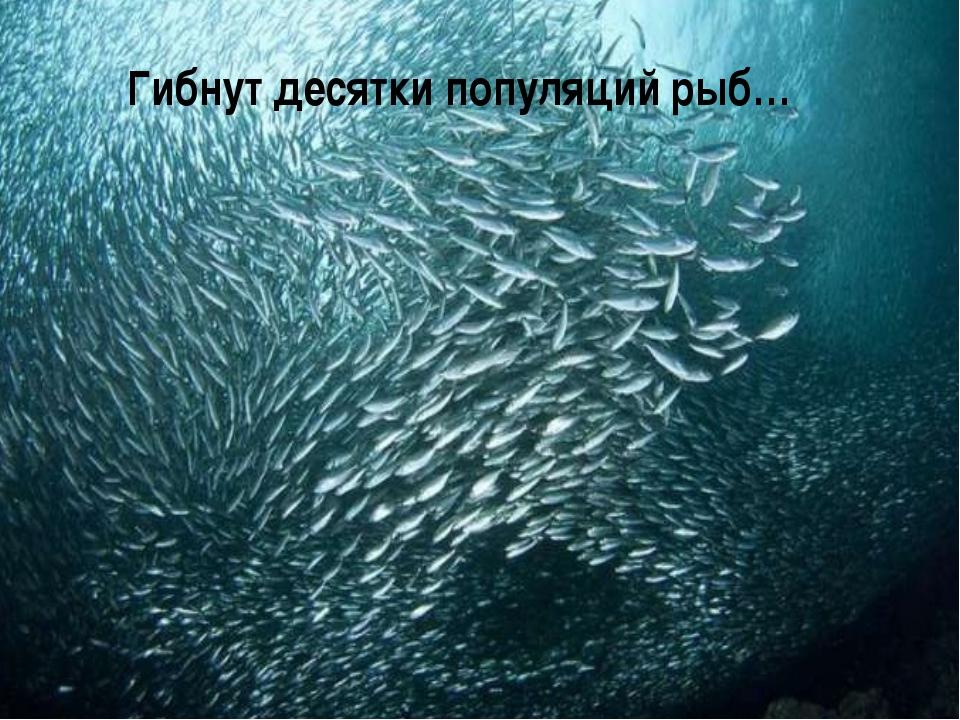 Гибнут десятки популяций рыб…