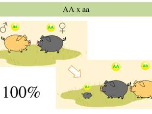 АА х аа 100%