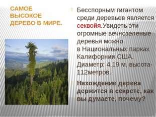САМОЕ ВЫСОКОЕ ДЕРЕВО ВМИРЕ. Бесспорным гигантом среди деревьев является сек