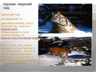 Аму́рский тигр (уссурийскийили дальневосточный), самый северный тигр. Зан