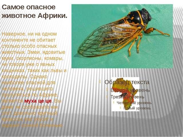 Самое опасное животное Африки. Наверное, ни на одном континенте не обитает ст...