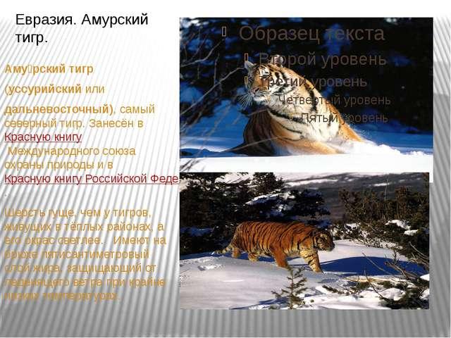 Аму́рский тигр (уссурийскийили дальневосточный), самый северный тигр. Зан...