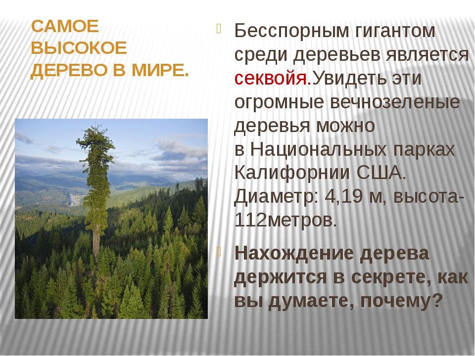 САМОЕ ВЫСОКОЕ ДЕРЕВО ВМИРЕ. Бесспорным гигантом среди деревьев является сек...