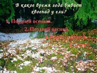 В какое время года бывает хвоепад у ели? 1. Поздней осенью. 2. Поздней весной