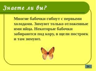 Знаете ли вы? Многие бабочки гибнут с первыми холодами. Зимуют только отложе