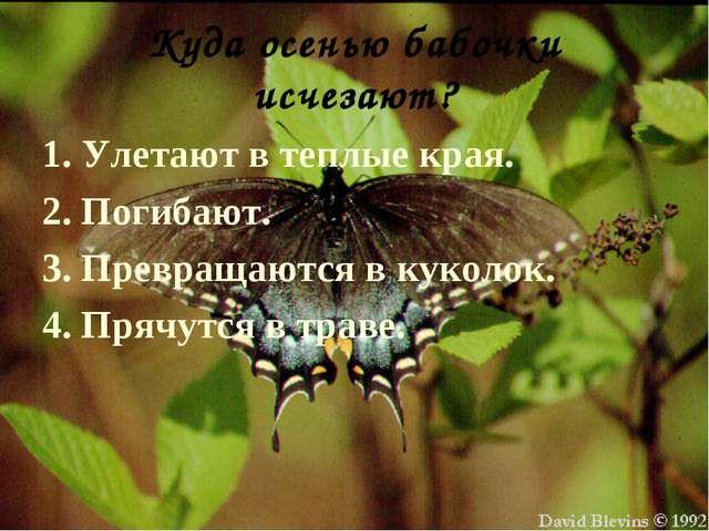 Куда осенью бабочки исчезают? 1. Улетают в теплые края. 2. Погибают. 3. Превр...