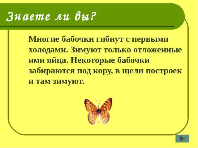 Знаете ли вы? Многие бабочки гибнут с первыми холодами. Зимуют только отложе...