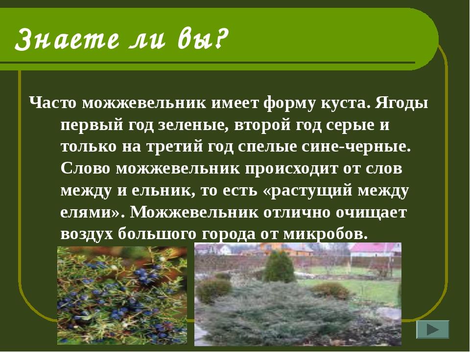 Знаете ли вы? Часто можжевельник имеет форму куста. Ягоды первый год зеленые,...
