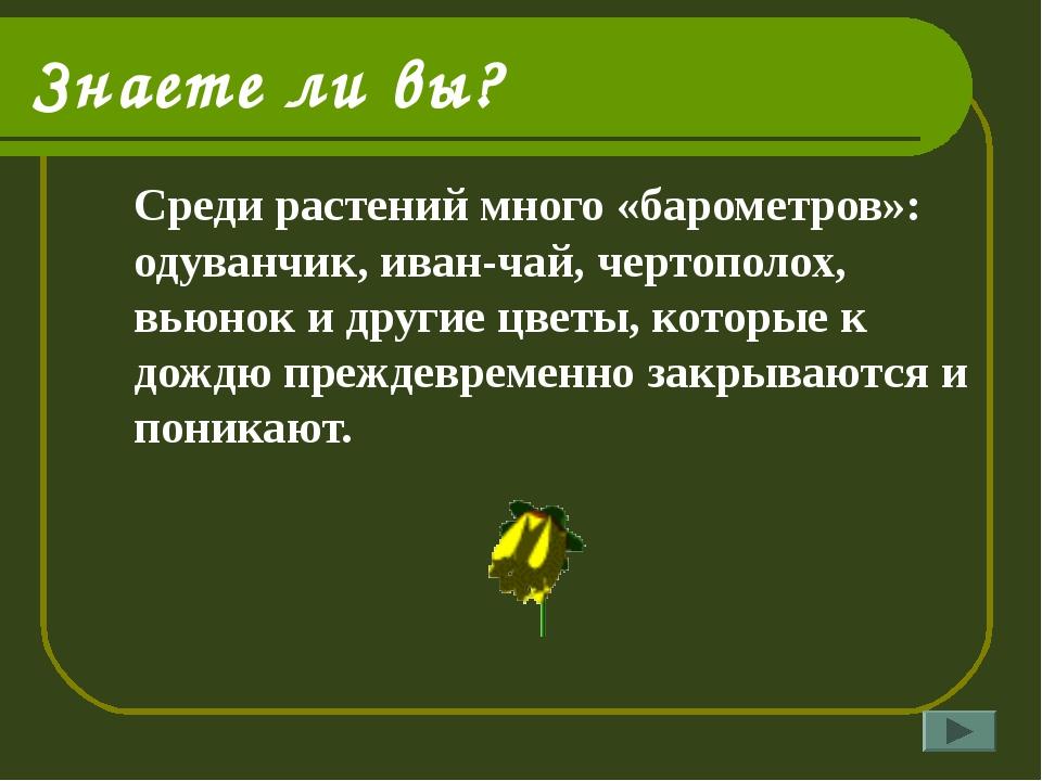 Знаете ли вы? Среди растений много «барометров»: одуванчик, иван-чай, чертоп...