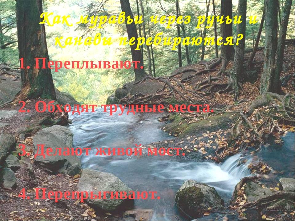 Как муравьи через ручьи и канавы перебираются? 1. Переплывают. 2. Обходят тру...