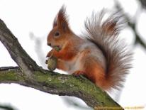http://cdrrhq.ru/animals/img/squirrel2.jpg