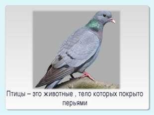 Птицы – это животные , тело которых покрыто перьями