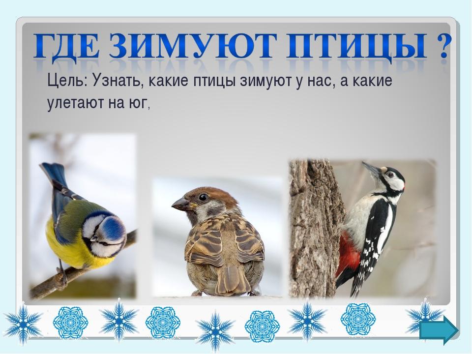 Цель: Узнать, какие птицы зимуют у нас, а какие улетают на юг,