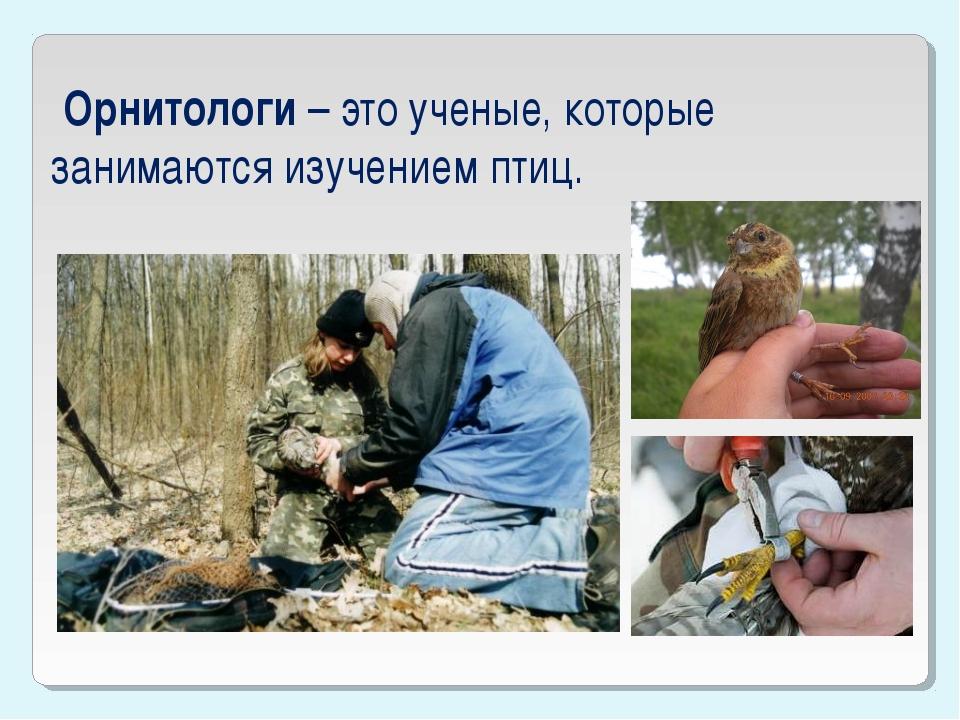 Орнитологи – это ученые, которые занимаются изучением птиц.