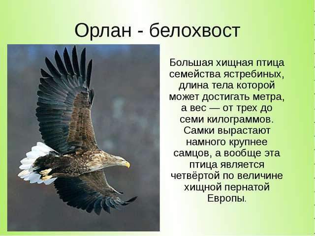 Орлан - белохвост Большая хищная птица семейства ястребиных, длина тела котор...