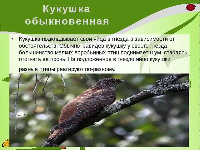 Кукушка обыкновенная Кукушка подкладывает свои яйца в гнезда в зависимости от...