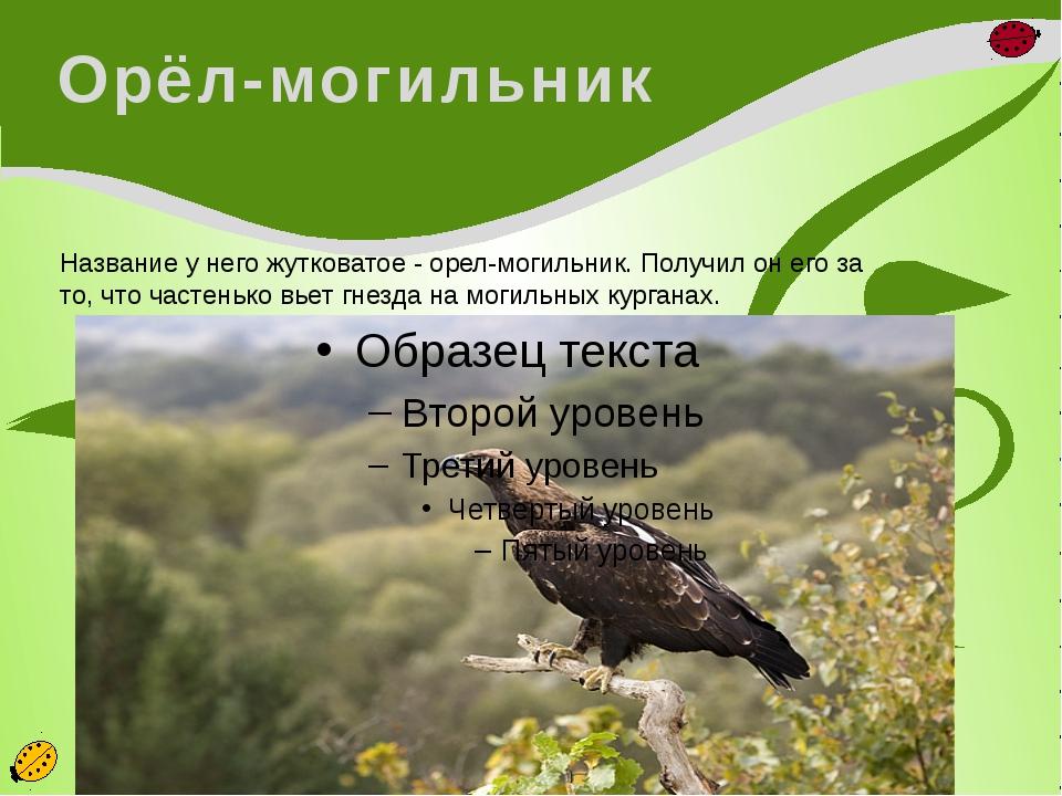 Орёл-могильник Название у него жутковатое - орел-могильник. Получил он его за...