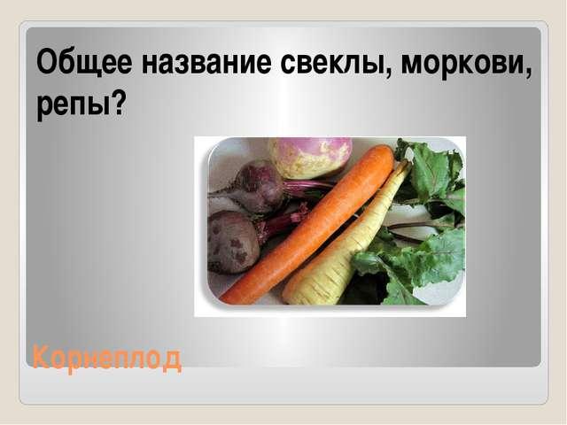 Корнеплод Общее название свеклы, моркови, репы?
