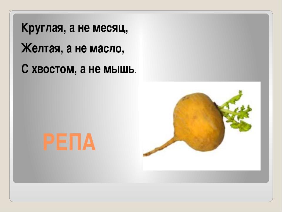 РЕПА Круглая, а не месяц, Желтая, а не масло, С хвостом, а не мышь.