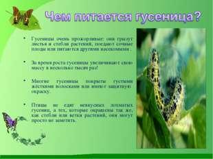 Гусеницы очень прожорливые: они грызут листья и стебли растений, поедают соч