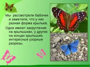 Мы рассмотрели бабочек и заметили, что у них разная форма крыльев. Одни имею