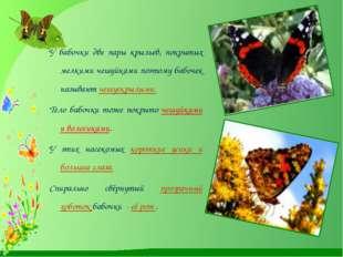 У бабочки две пары крыльев, покрытых мелкими чешуйками поэтому бабочек назыв