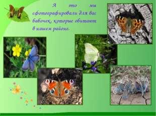 А это мы сфотографировали для вас бабочек, которые обитают в нашем районе.
