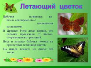 Бабочки появились на Земле одновременно с цветковыми растениями. В Древнем Ри