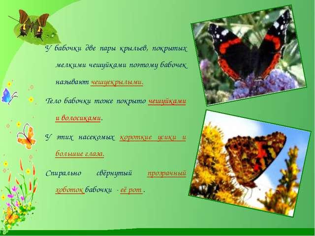 У бабочки две пары крыльев, покрытых мелкими чешуйками поэтому бабочек назыв...