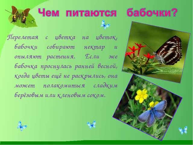 Перелетая с цветка на цветок, бабочки собирают нектар и опыляют растения. Есл...