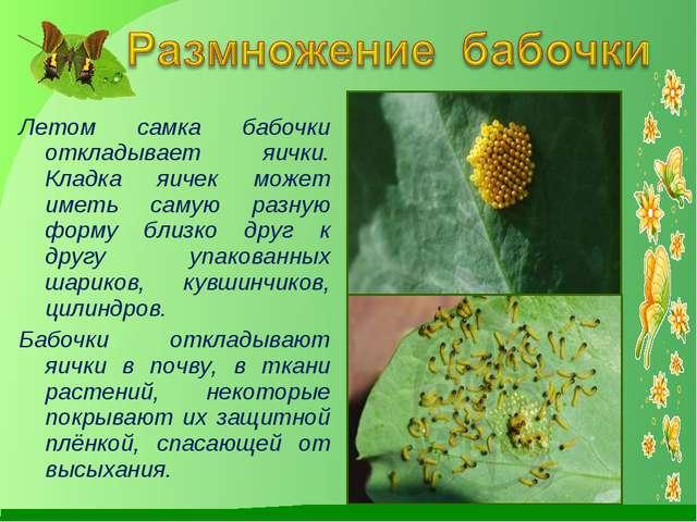 Летом самка бабочки откладывает яички. Кладка яичек может иметь самую разную...
