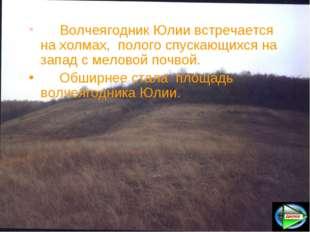 Волчеягодник Юлии встречается на холмах, полого спускающихся на запад с мел