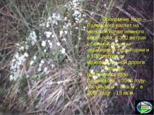 Проломник Козо –Полянского растет на меловой почве немного выше лога, в 300