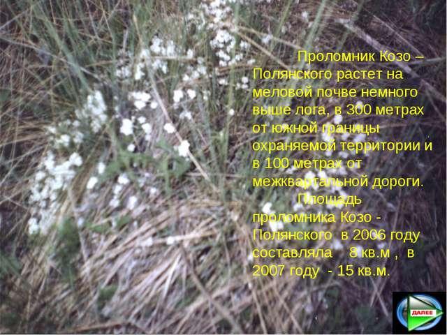 Проломник Козо –Полянского растет на меловой почве немного выше лога, в 300...