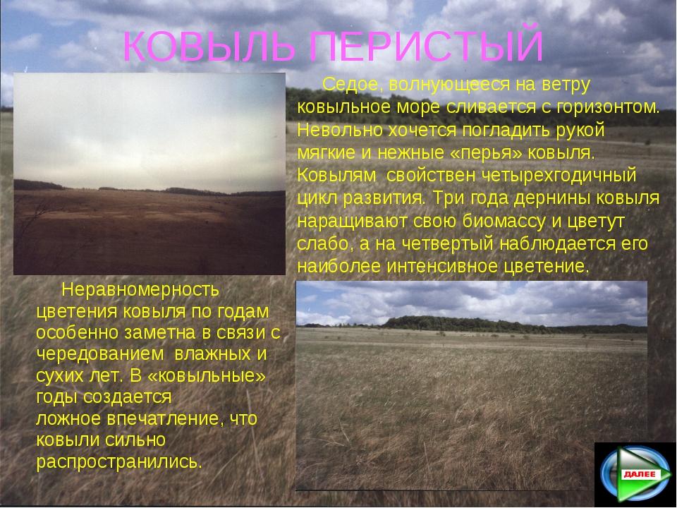 КОВЫЛЬ ПЕРИСТЫЙ Седое, волнующееся на ветру ковыльное море сливается с гориз...