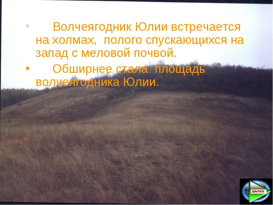 Волчеягодник Юлии встречается на холмах, полого спускающихся на запад с мел...