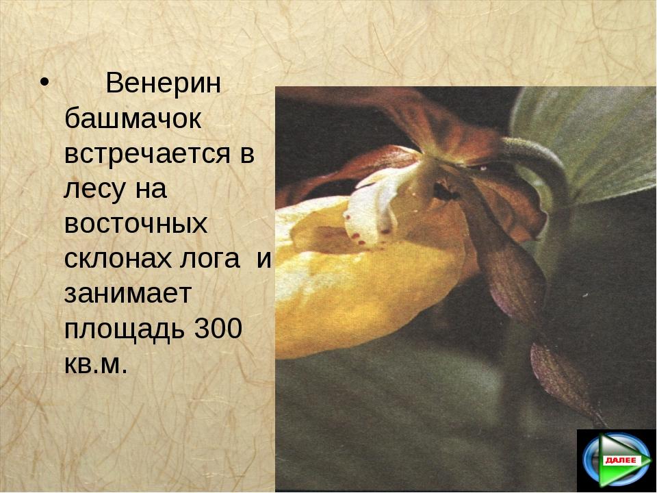 Венерин башмачок встречается в лесу на восточных склонах лога и занимает пл...