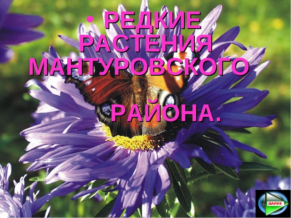 РЕДКИЕ РАСТЕНИЯ МАНТУРОВСКОГО РАЙОНА.