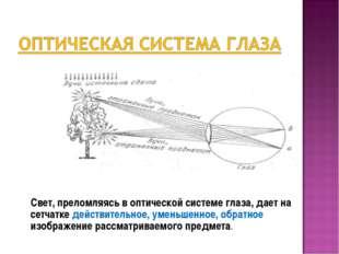 Свет, преломляясь в оптической системе глаза, дает на сетчатке действительно