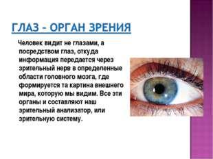 Человек видит не глазами, а посредством глаз, откуда информация передается ч