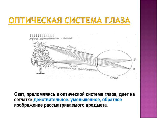 Свет, преломляясь в оптической системе глаза, дает на сетчатке действительно...
